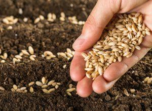 Ασφάλιση Λαθών και Παραλείψεων Παραγωγών & Εμπόρων Σπόρων